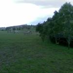 jump fields